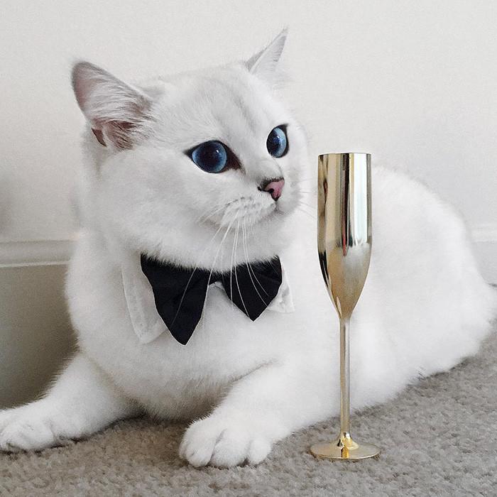 Встречайте кота с самыми красивыми в мире глазами животные, коты, красота