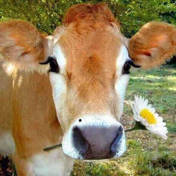 10. Когда природа действительно наградила тебя: животные, коровы, юмор
