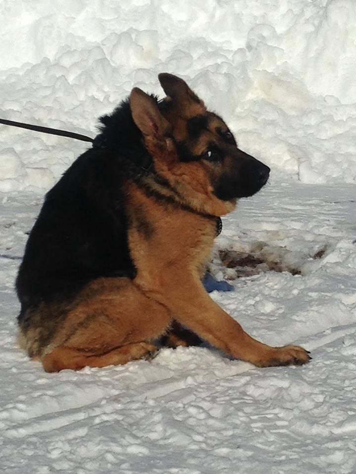Он не похож на обычных собак, но все еще очаровывает каждого встречного животные, собака