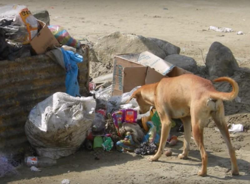 Жители бразильского города были в шоке, когда увидели кого несла эта собака животные, история