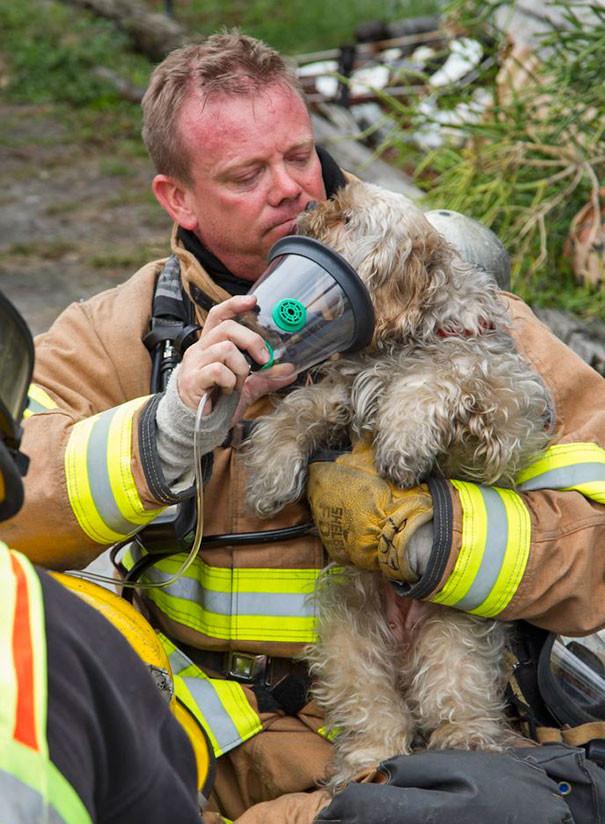 6. Собака, спасенная из огня, выглядывает из кислородной маски, чтобы лизнуть в щеку парамедика Марка Монагана животные, пожарные, пожары