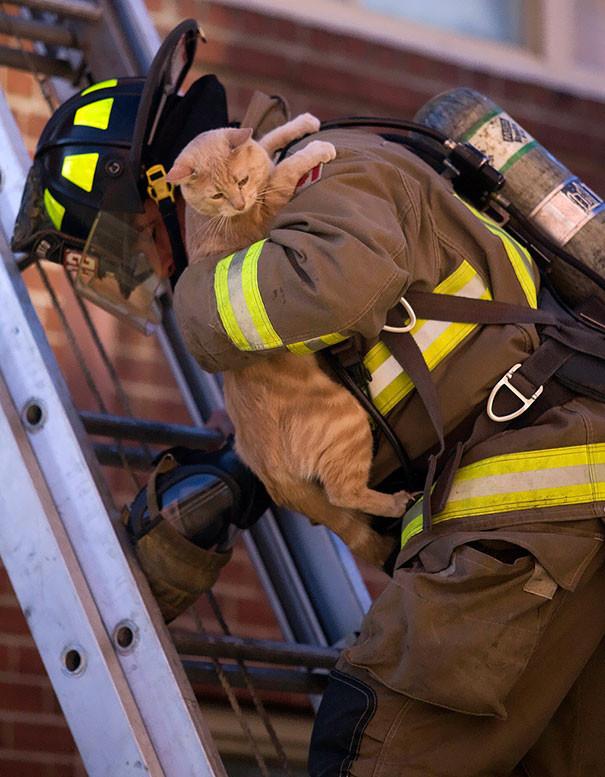 20. Спасение кота животные, пожарные, пожары