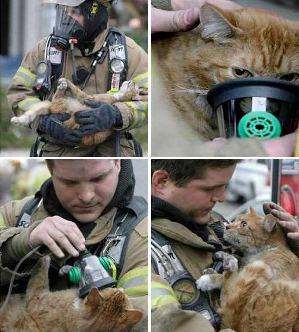 13. Любящий взгляд возвращенного к жизни кота животные, пожарные, пожары