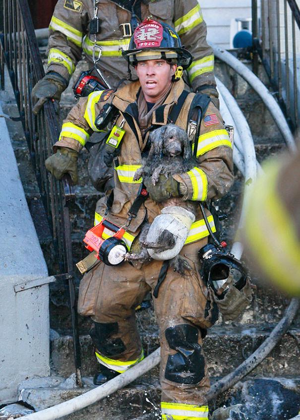 9. Пожарный Рэй Спеллмайер выносит пуделя Джозефа из горящего здания животные, пожарные, пожары