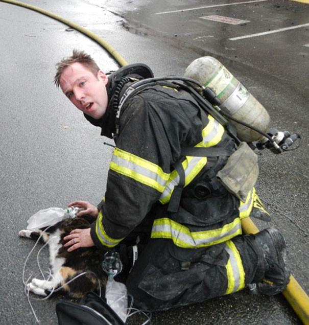 14. Спасение кота, которого вытащили из-под кровати, когда он уже еле дышал животные, пожарные, пожары