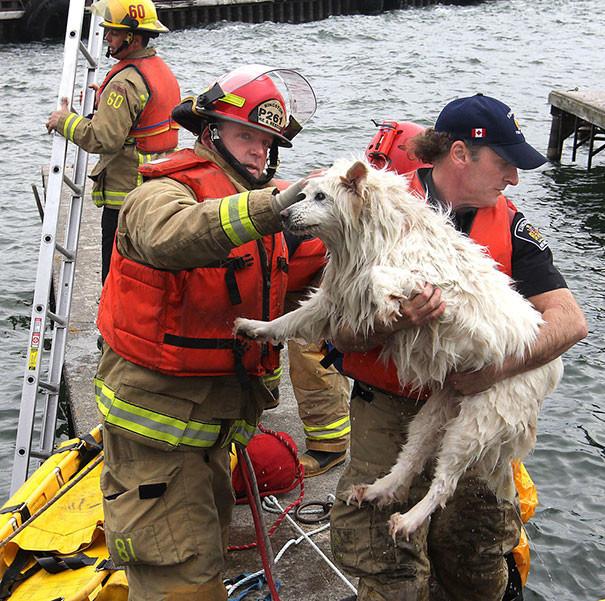 11. Незрячую собаку вытаскивают из озера Онтарио животные, пожарные, пожары