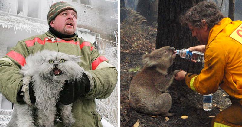 20 фотографий смелых пожарных, спасающих животных из огня животные, пожарные, пожары
