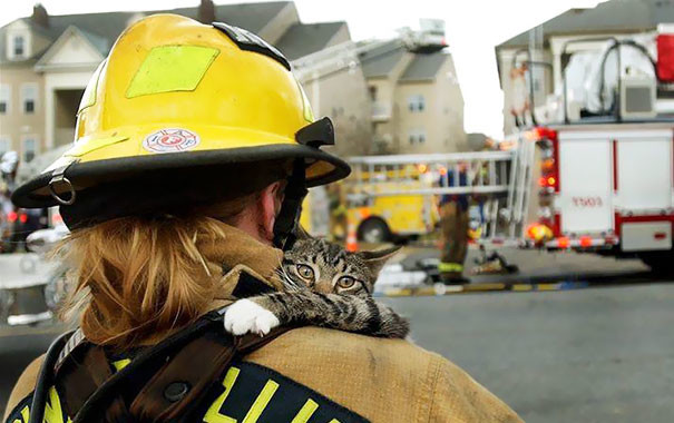 5. Кот забирается на плечо к спасшему его пожарному животные, пожарные, пожары