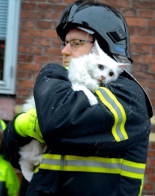 2. Пожарный в Дании спасает кошку из горящего дома животные, пожарные, пожары