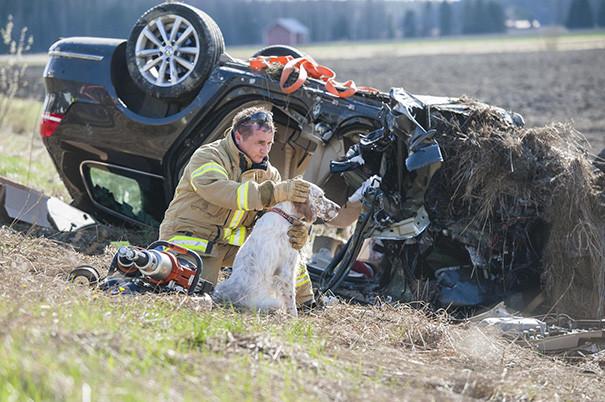 7. Пожарный обнимает собаку после автокатастрофы животные, пожарные, пожары