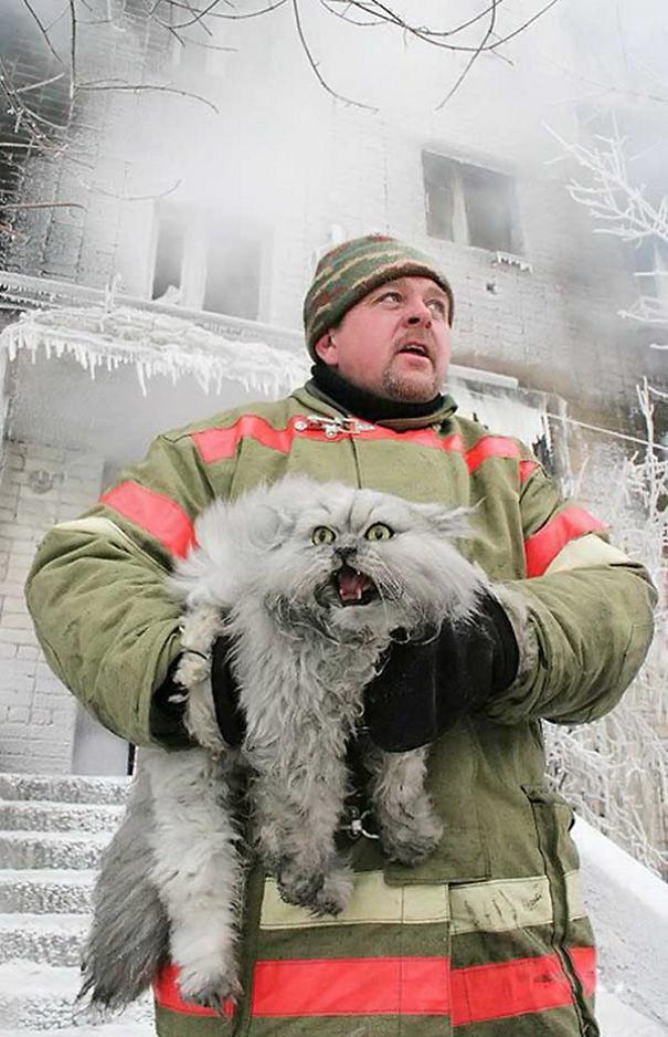 4. Русский пожарный спасает кота животные, пожарные, пожары