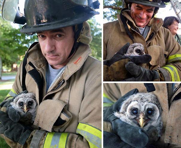 3. Совенок, потерявший родителей, спасен животные, пожарные, пожары