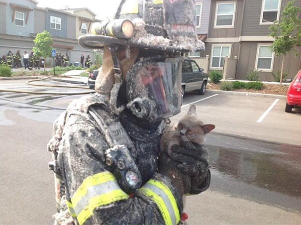 16. Кажется, кот не очень удивлен всем происходящим животные, пожарные, пожары