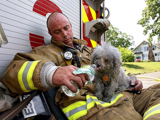 19. Пожарный с собакой, спасенной им из горящего дома в Коннектикуте животные, пожарные, пожары