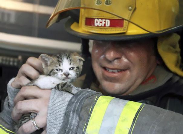 17. Капитан пожарной охраны Джон Лии осматривает одного из двух котов, спасенных из пожара в дуплексе животные, пожарные, пожары