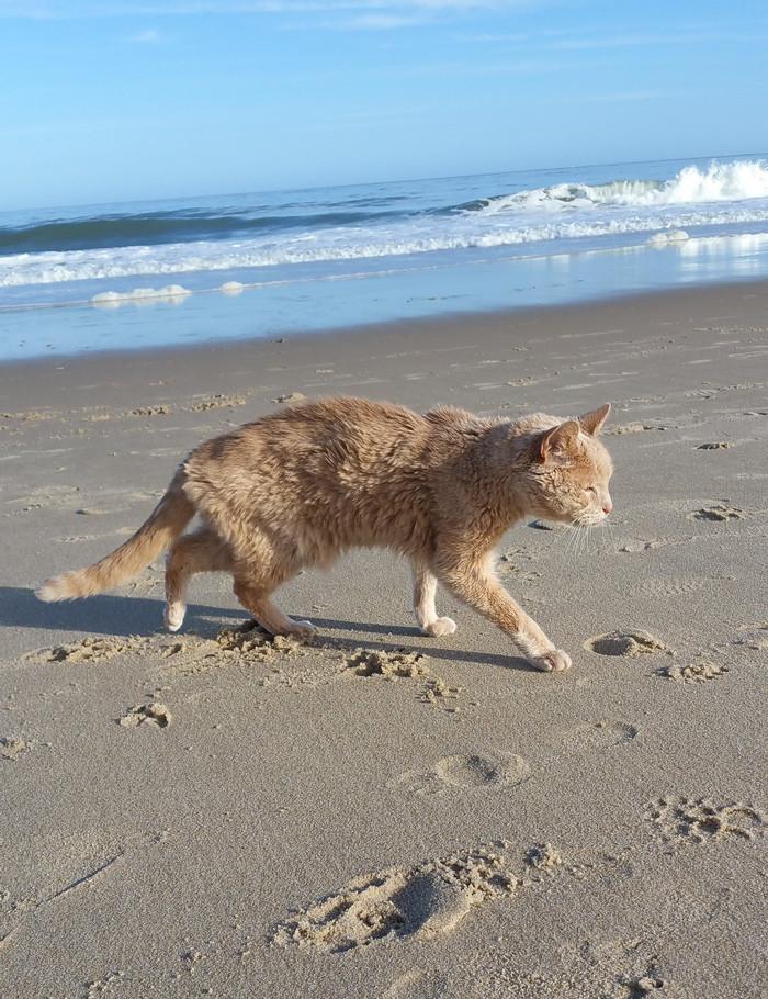 Николь хотела подарить Тиггеру любовь, в которой он нуждался, и решила забрать его домой доброта, животные, коты