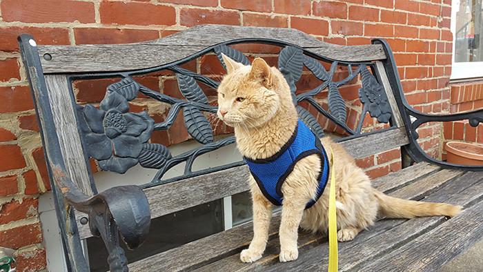 Но это не остановило Николь и Тиггера доброта, животные, коты