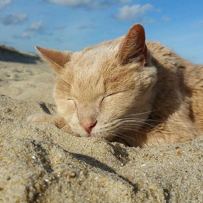 На закате жизни 21-летнего кота Тиггера, хозяин бросил его доброта, животные, коты