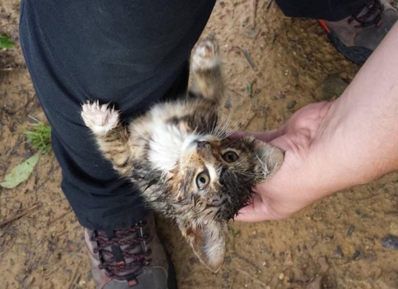 Бродячий котенок остановил молодого человека и попросил забрать его домой животные, коты, котёнок