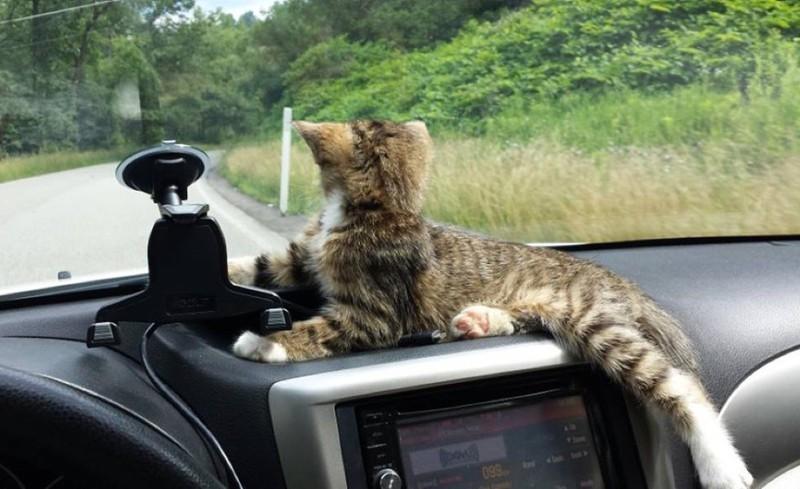 Он нашел любимое место в машине. животные, коты, котёнок