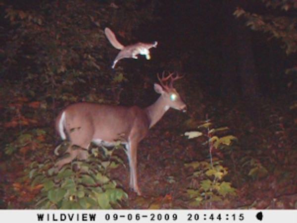 Странные фотографии, запечатленные на фотоловушку животные, фотографии, фотоловушка