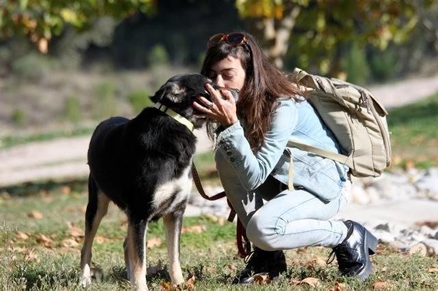 Эта несчастная окаменевшая собака никогда не думала, что ее кто-то полюбит животные, собака, трогательное