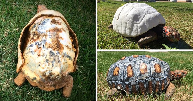 Травмированная черепаха получила первый в мире панцирь, распечатанный на 3D-принтере 3d принтер, животные, панцирь, пожар, черепаха