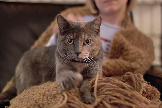 Выяснилось, почему котики топчутся по тебе своими лапками животные, кот, кошка, это интересно