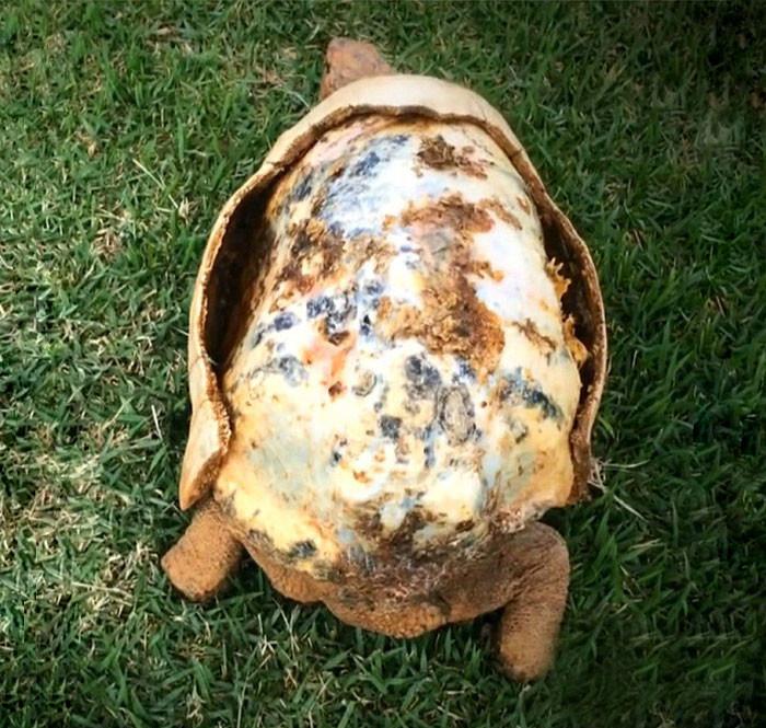 Фредди очень повезло, ведь он сумел выжить в лесном пожаре  3d принтер, животные, панцирь, пожар, черепаха