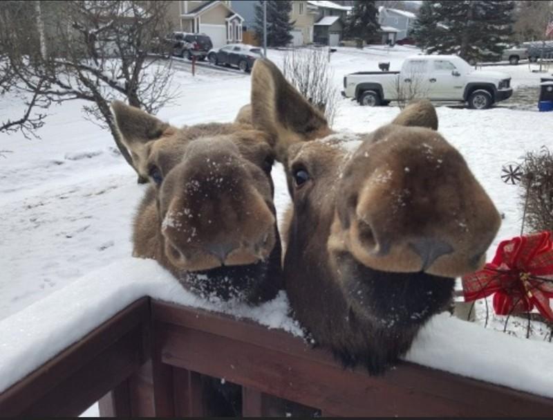 Обычное утро в Канаде. животные, прикол, юмор