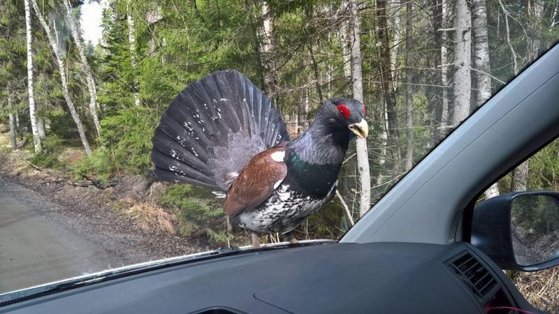 Кого только не встретишь на лесных дорогах. животные, прикол, юмор