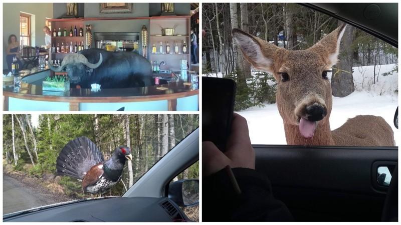 Иногда встречи с животными бывают очень неожиданными животные, прикол, юмор
