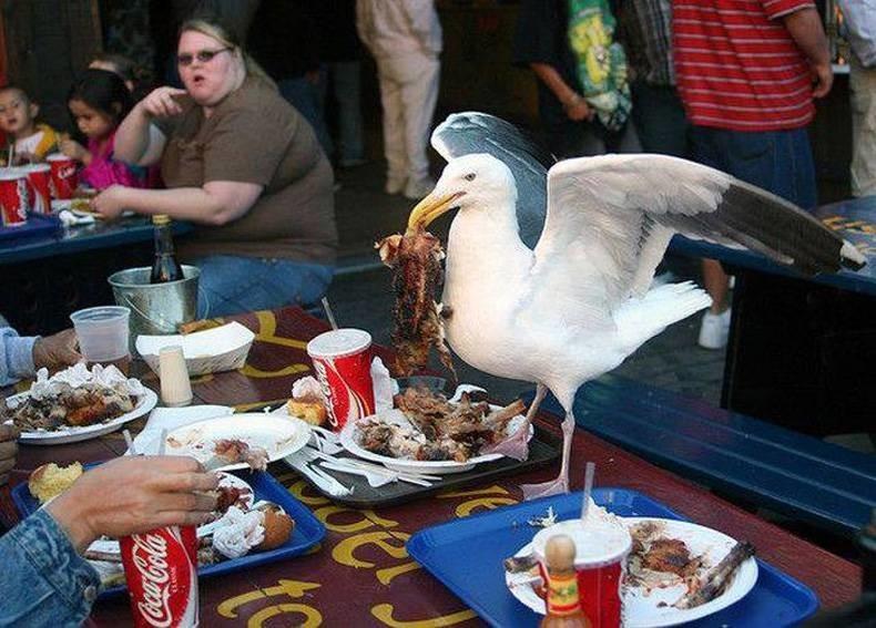 Наглые европейские голуби. животные, прикол, юмор