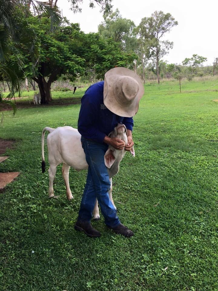 «Они до сих пор любят обниматься с Берил и даже ее вылизывают». австралия, животные, корова