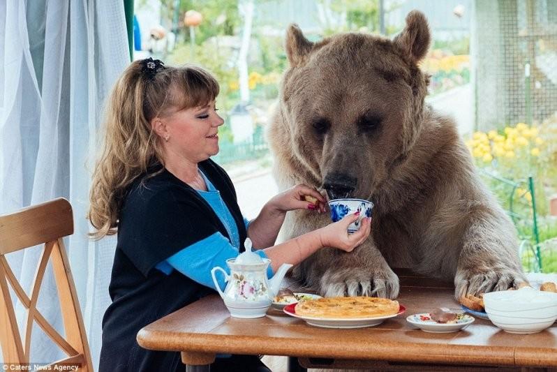 Голод не тетка: В день Степан съедает 25 кг рыбы, овощей и яиц, и обед в доме Пантелеенко - мероприятие очень серьезное животные, медведь