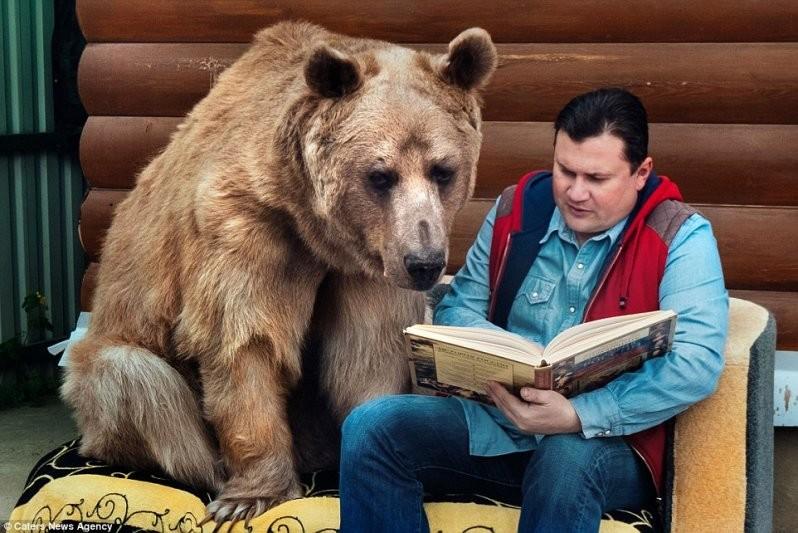 Член семьи: Теперь это взрослое 23-летнее животное весом более 300 кг и высотой более 2 метров животные, медведь