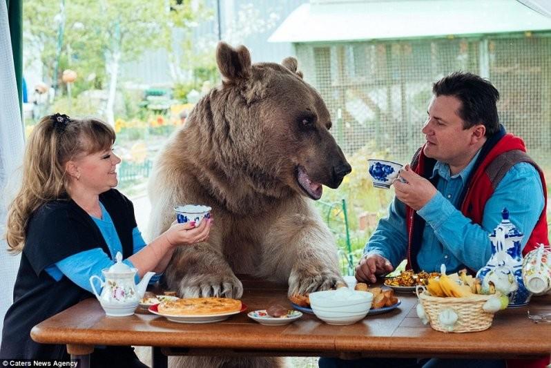 """""""Суррогатный"""" ребенок: Светлана и Юрий Пантелеенко взяли к себе медвежонка Степана, когда ему было 3 месяца. Его нашли охотники в лесу, он потерял маму животные, медведь"""
