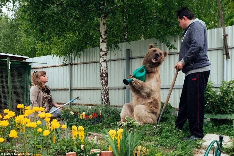 Нужна помощь? Степан с удовольствием польет цветы в саду животные, медведь