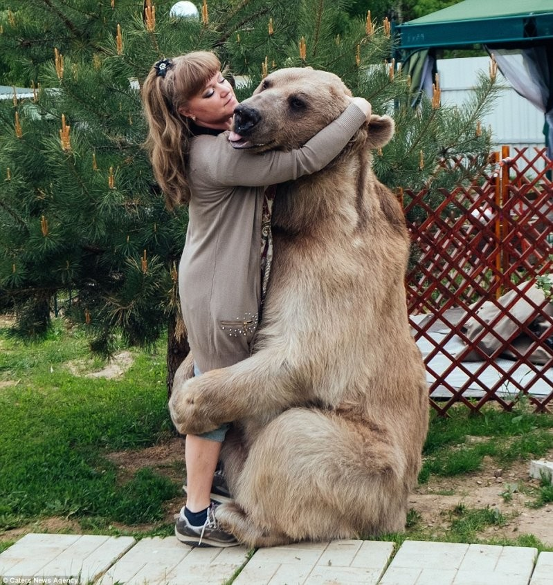 Медвежьи объятия: Супруги уверяют, что Степан совершенно ручной, очень добродушный и обожает обниматься животные, медведь