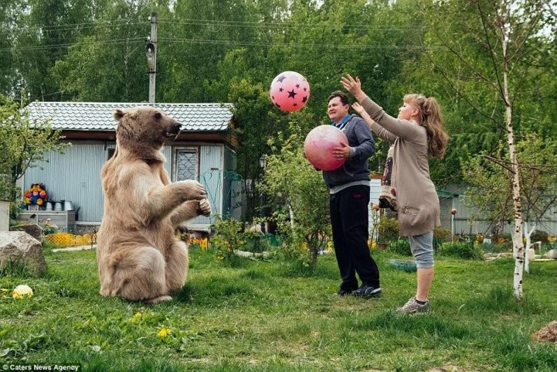 Игры на свежем воздухе: Степа любит как следует подвигаться - например, поиграть в мяч. Так что съеденная еда не откладывается на медвежьих боках животные, медведь