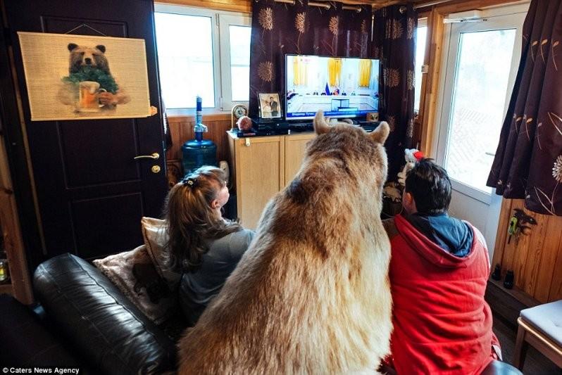 Доверие:  Степан любит смотреть телевизор вместе со своей семьей, уютно устроившись рядом на диване животные, медведь