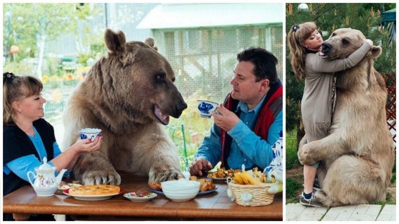 Он похож на большую плюшевую игрушку! 300-килограммовый медведь в качестве домашнего питомца животные, медведь