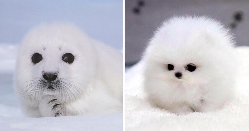 32.  животные, собака, сходство, тюлень