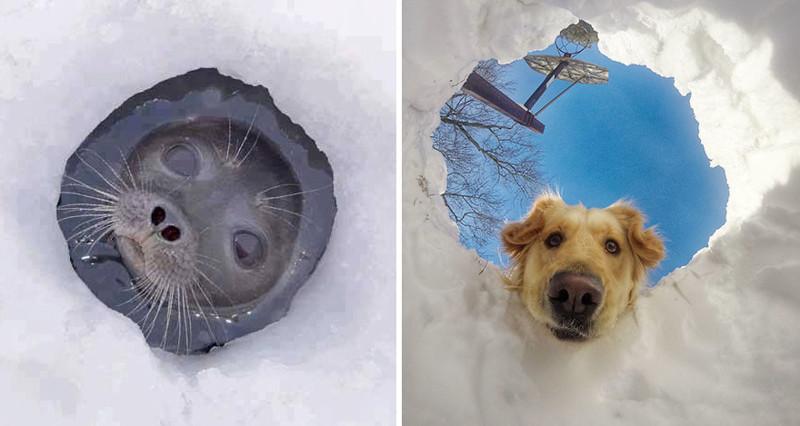 8.  животные, собака, сходство, тюлень