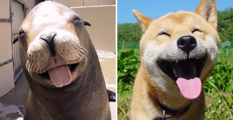 2.  животные, собака, сходство, тюлень