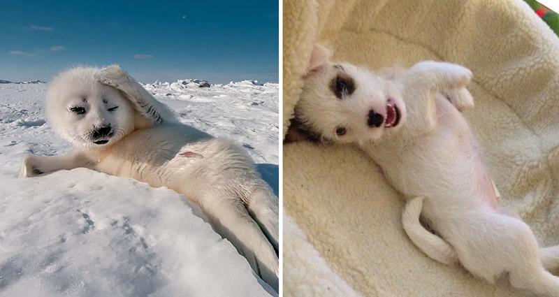 10.  животные, собака, сходство, тюлень