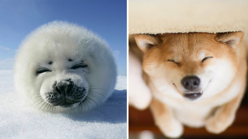 40.  животные, собака, сходство, тюлень