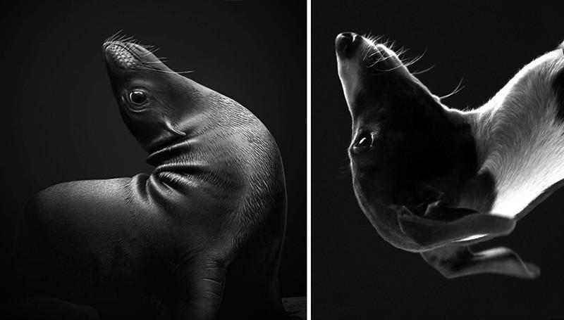 14.  животные, собака, сходство, тюлень
