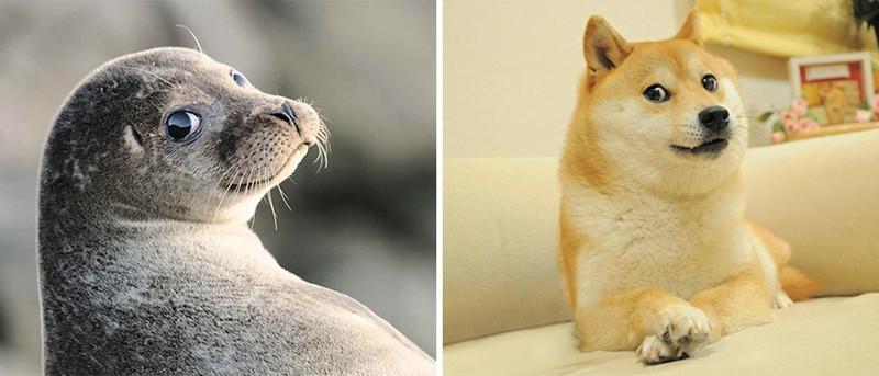 4.  животные, собака, сходство, тюлень