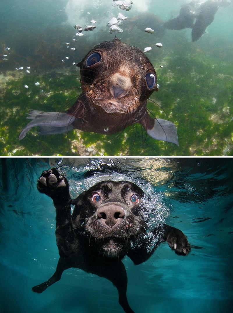 3.  животные, собака, сходство, тюлень